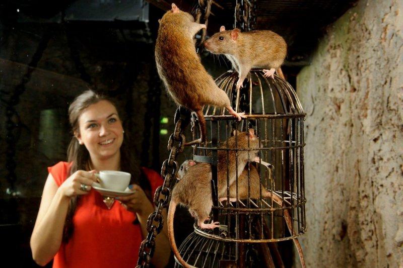 敢跟老鼠共處一室悠閒喝咖啡嗎?(圖/The London Dungeon)