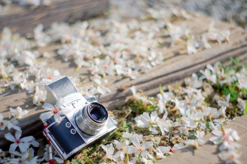 一年一度的桐花季要來了,帶著相機去拍下五月雪吧!(圖/*嘟嘟嘟* @flickr)