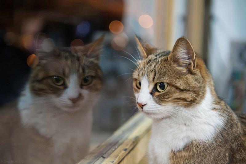 動物感受到的其實比人類以為的還要多,牠們的心你真的懂嗎?(圖/Nikos Koutoulas@flickr)