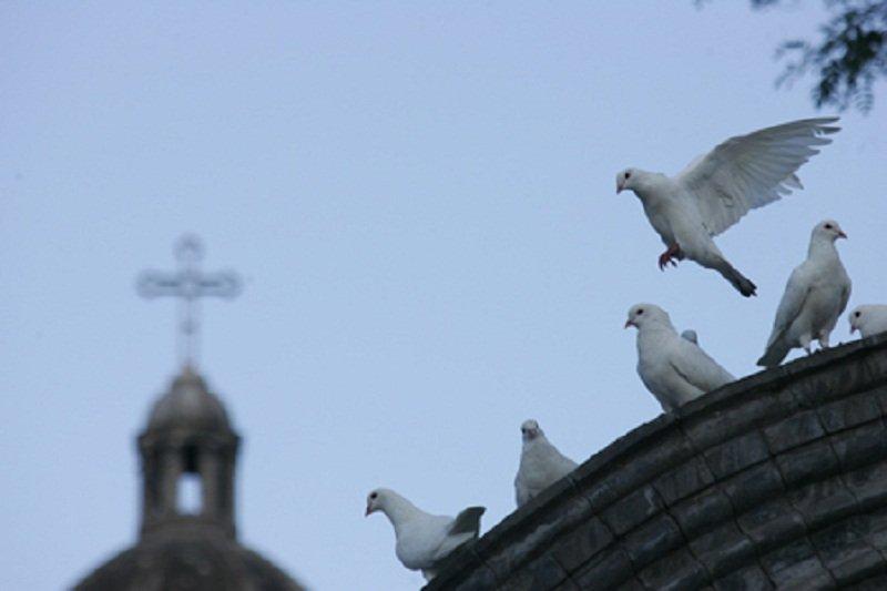 鸽子棲息在教堂屋顶(新浪網)