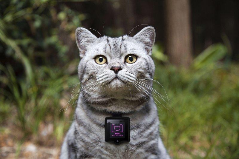 Catstacam讓喵星人親自掌鏡成為攝影師(圖/Whiskas Catstacam)