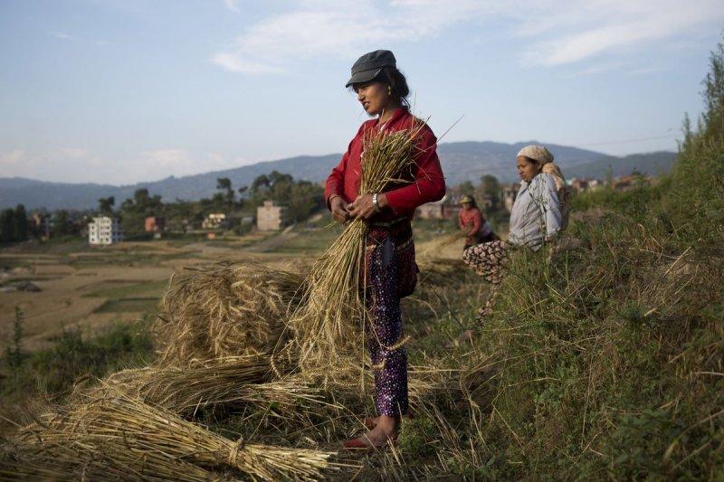 農業興起是人類社會的重要演進,但科學家研究發現,人類的骨骼也因此變輕。