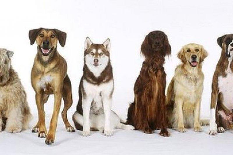 27000年前,狼與狗分家,狗從此馴化走入人類生活。(取自推特)