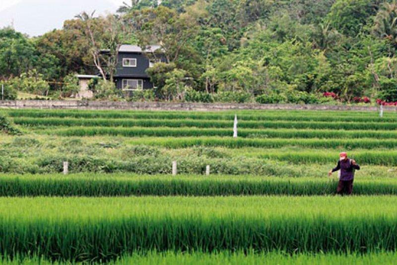 農委會修改法令,讓蓋農舍變困難,過去一地難求的台東縣東河鄉農地,目前傳出交易停擺。(攝影者.賴建宏)