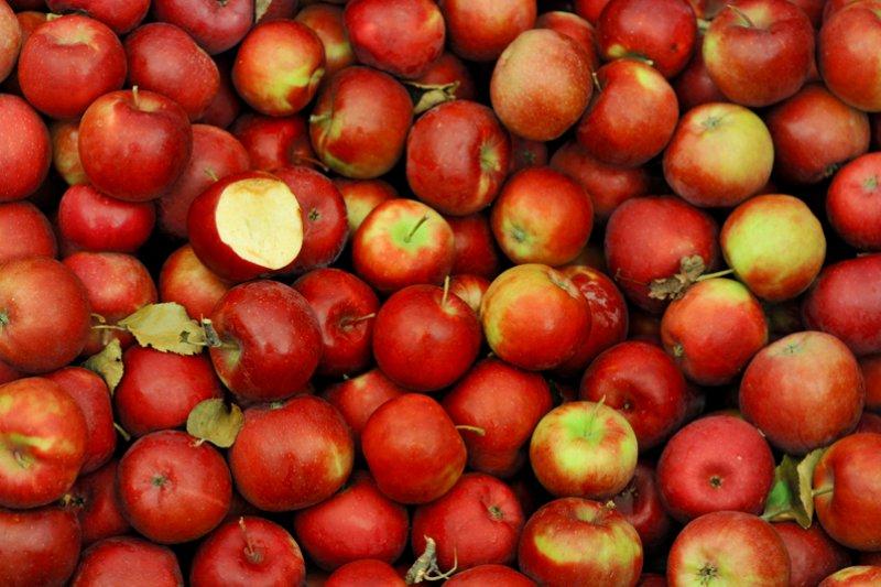 吃蘋果好處多,但不會減少你看醫生的次數(圖/Jesse Millan@flickr)
