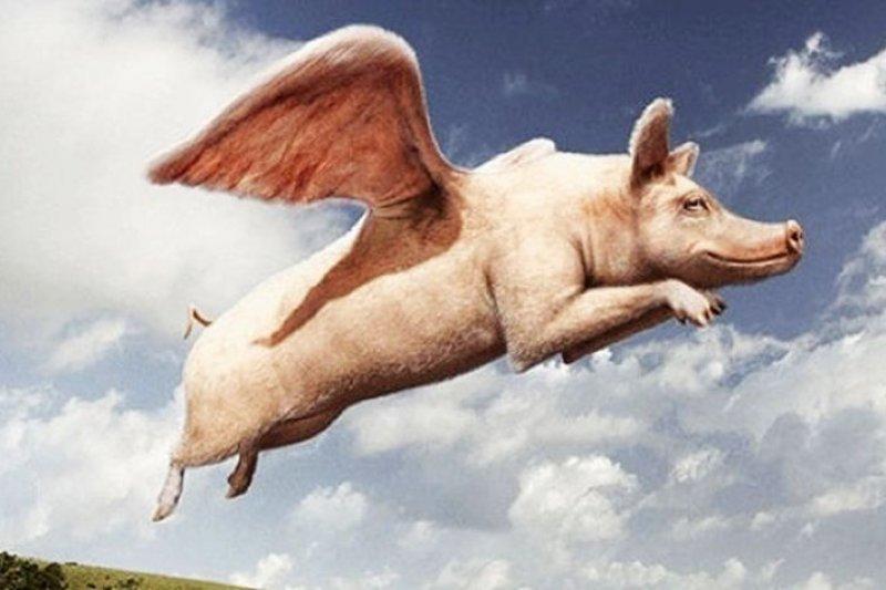 現實世界裡,沒有讓豬都能飛的風口。(騰訊大家網)