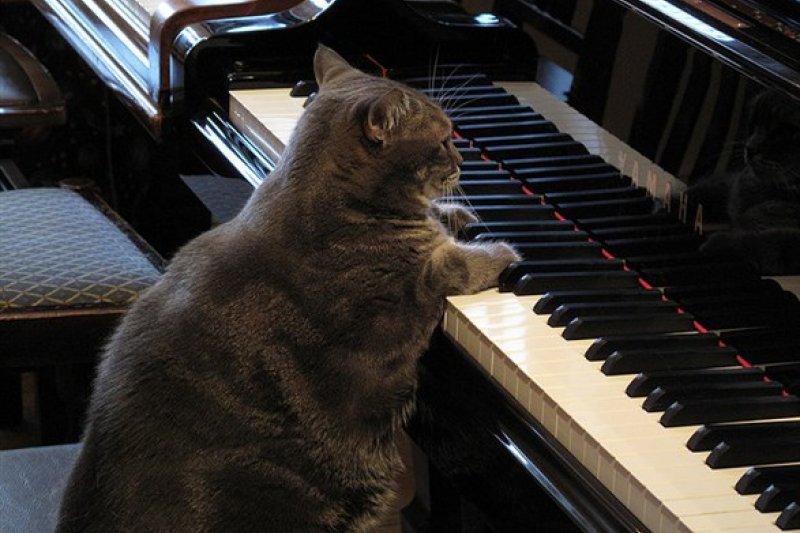 七首作曲家以貓咪為主題發想的好聽歌曲(圖/欣傳媒)