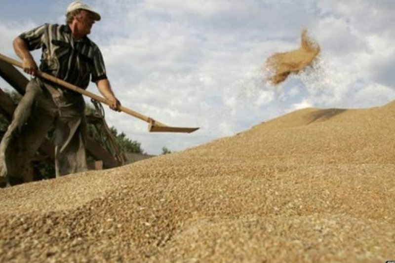 幅員遼闊的俄羅斯有大片肥沃耕地,但西伯利亞東部的土地並非最肥沃的農業用地。(BBC中文網)