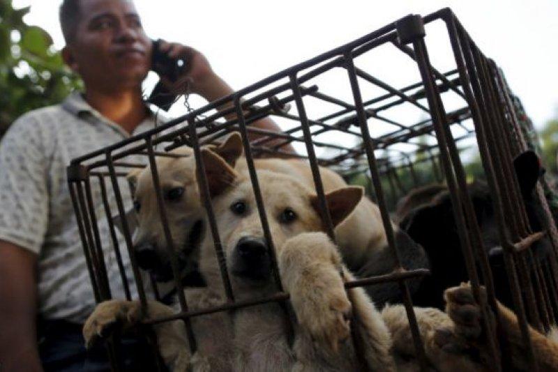 據媒體報導,廣西玉林狗肉節將有約1萬隻狗被宰殺。(BBC中文網)
