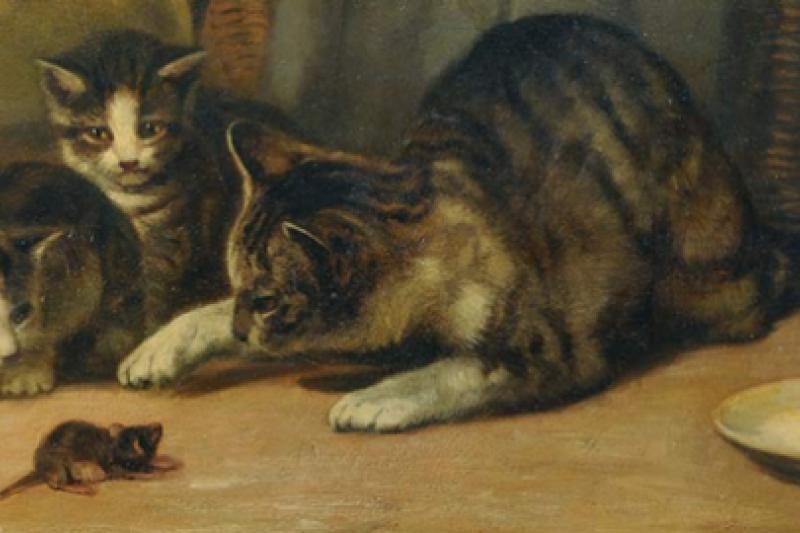 貓愛捉老鼠是天性?(取自推特)