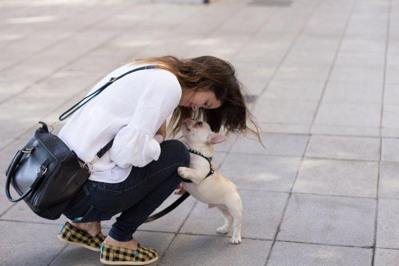想用視訊軟體與狗狗打招呼,牠卻滿臉你是誰的疑惑。(圖/Tomas_Roggero@flickr)