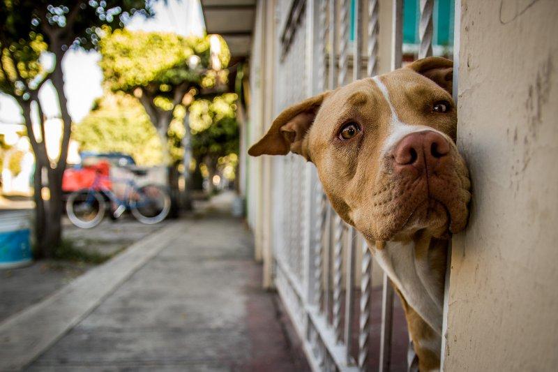 希臘的財務危機使得許多人付不出飼養費用,而棄養寵物(圖/Liliana Saeb@flickr)