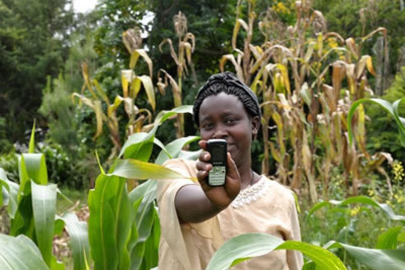 非洲的農夫藉由IBM的EZ-farm計畫,可以運用智慧型手機來管理自己的農作。(翻攝網路)
