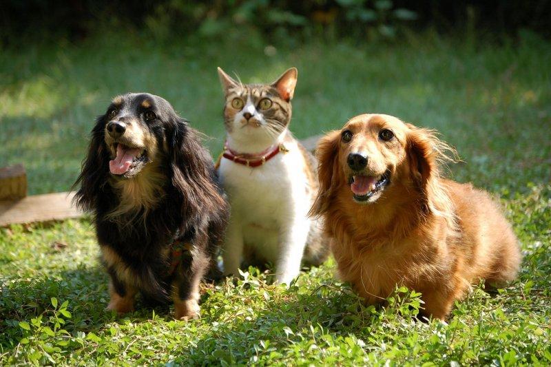 養貓養狗跟個性息息相關?(圖/raneko@flickr)