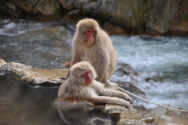 日本為了奧運積極爭取外國觀光客之際,難道要拒絕外國人泡湯嗎?(圖/Nick Richards@flickr)