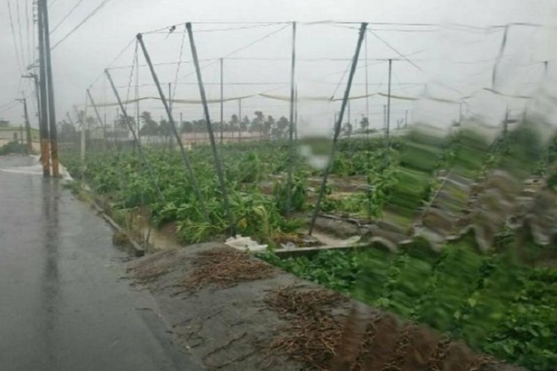 蘇迪勒風災農損嚴重。(屏東縣政府提供)