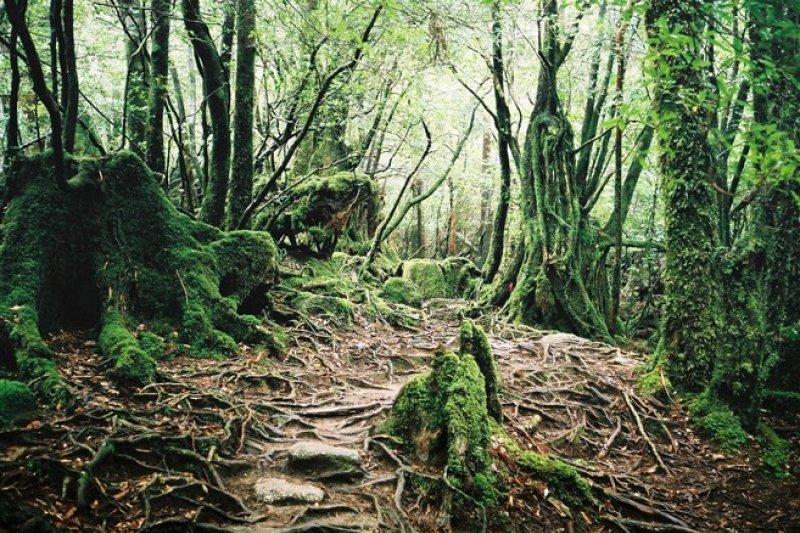 宮崎駿的靈感來源!魔法公主守護的那座森林。