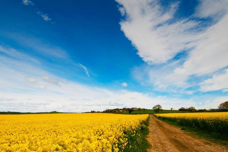 哪有比農業更有意義的工作?如果以生產食物為業,哪還要擔心沒得吃?(YorkshirePhotoWalks@flickr)
