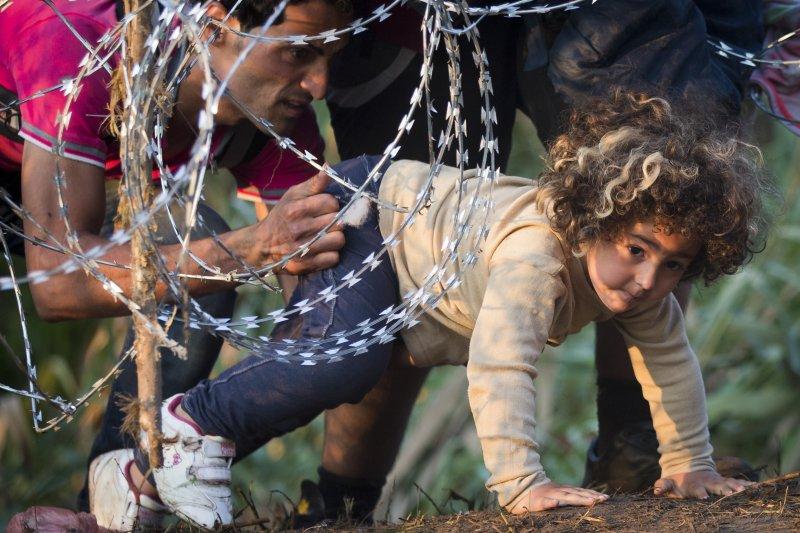 敘利亞難民兒童,小女孩奮力爬過匈牙利邊界的帶刺鐵絲網(美聯社)