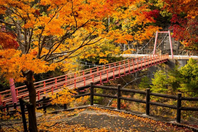 京都的秋天楓意濃厚(圖/TakumaKimura@flickr)