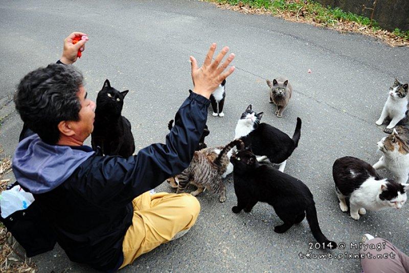會讓貓奴陷入瘋狂的日本貓島。