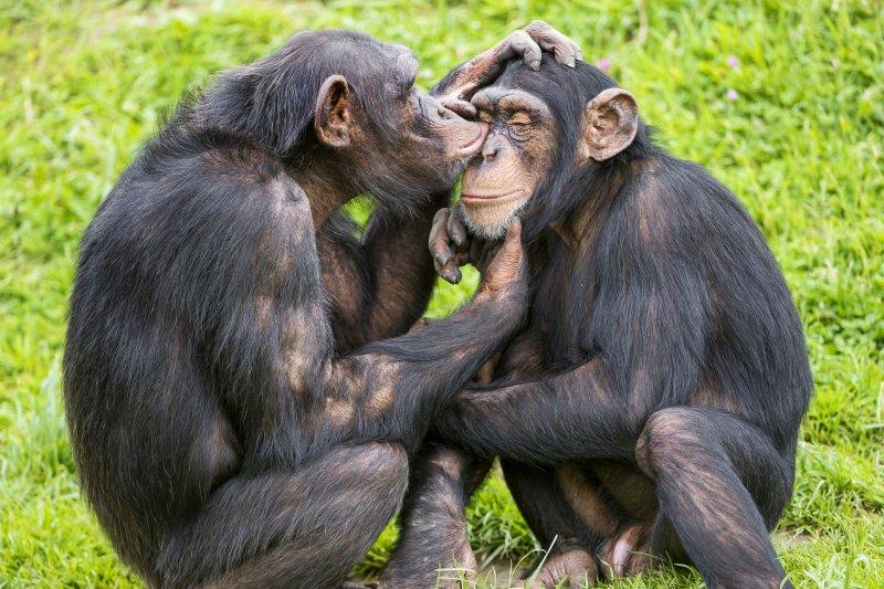 動物跟人類一樣會自慰嗎?(圖/TambakoTheJaguar@flickr)