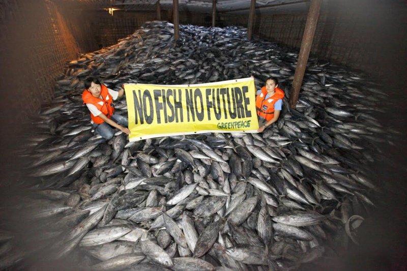 對於台籍漁船「順得慶888號」在太平洋公海上進行捕撈作業是否為無照捕撈,且有無違反鯊魚捕撈規定及非法轉載魚貨,綠色和平組織與我漁業署雙方各執一詞。(取自綠色和平組織網站)