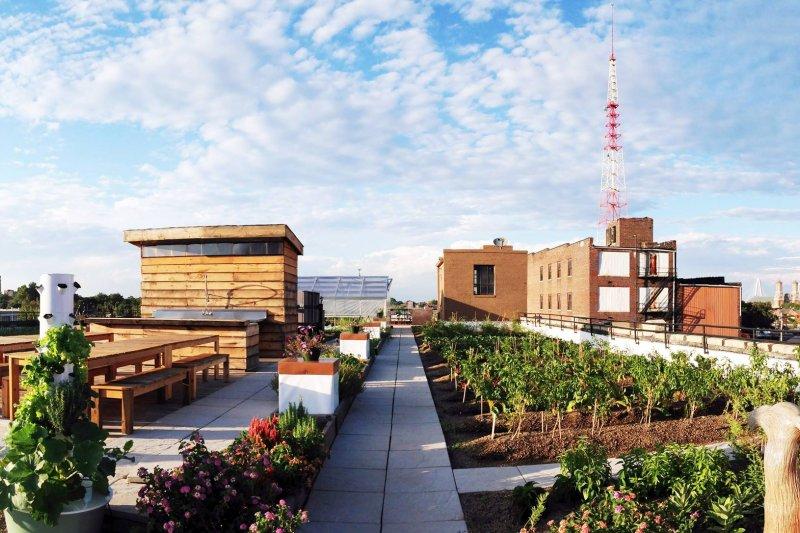實踐綠色生活, 屋頂空間有效利用 (圖/Urban Harvest STL@Facebook)
