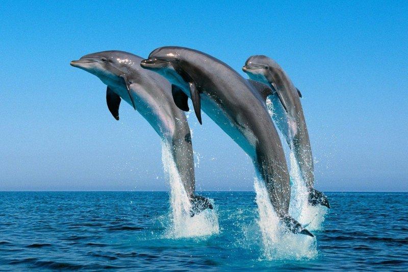 海豚應該自由自在優遊於大海之中。(海豚灣截圖)