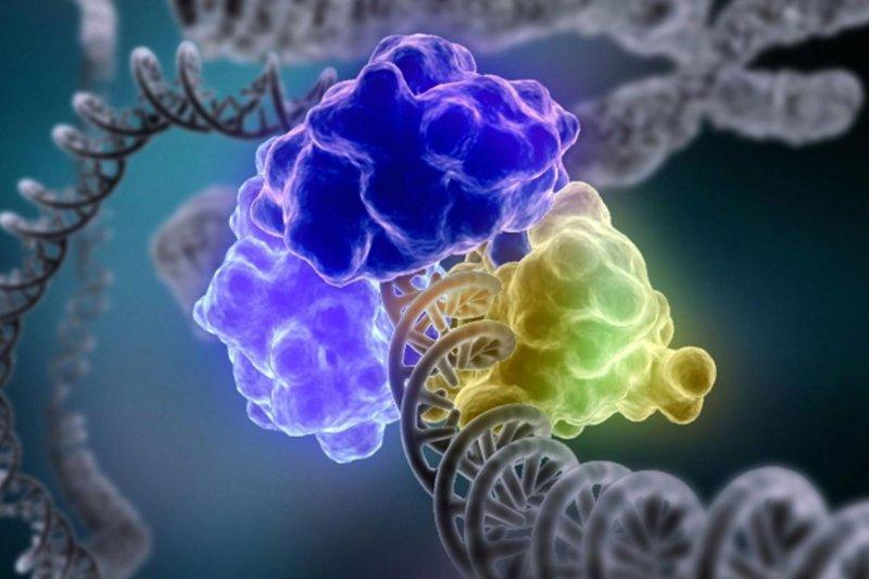 DNA修復(取自網路)