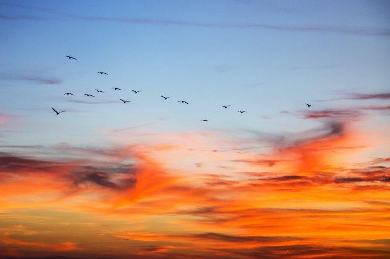 朋友本是同林鳥,直銷來時各自飛(圖/PatrickEmerson@flickr)