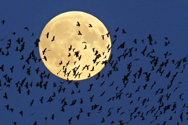 月球,人類永恆的追求(美聯社)