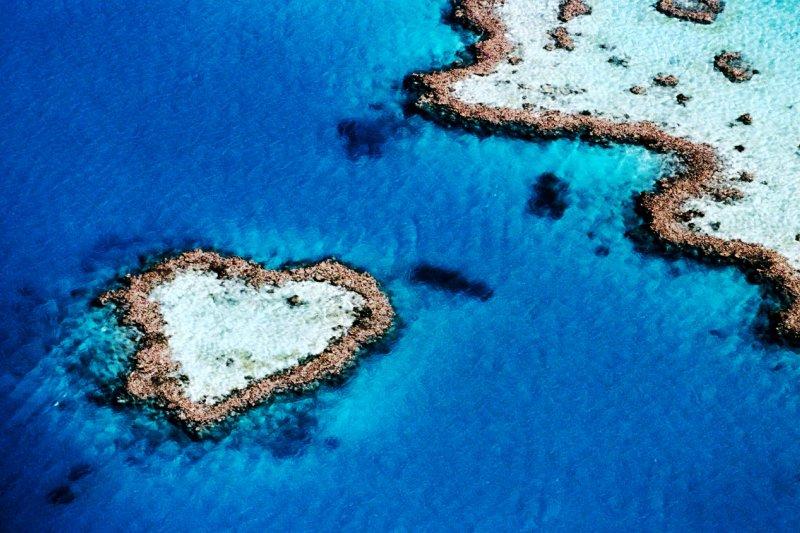 垃圾島變生態樂園,澳洲佬的島主夢。圖為心型珊瑚礁。(圖/lifepopper.com)