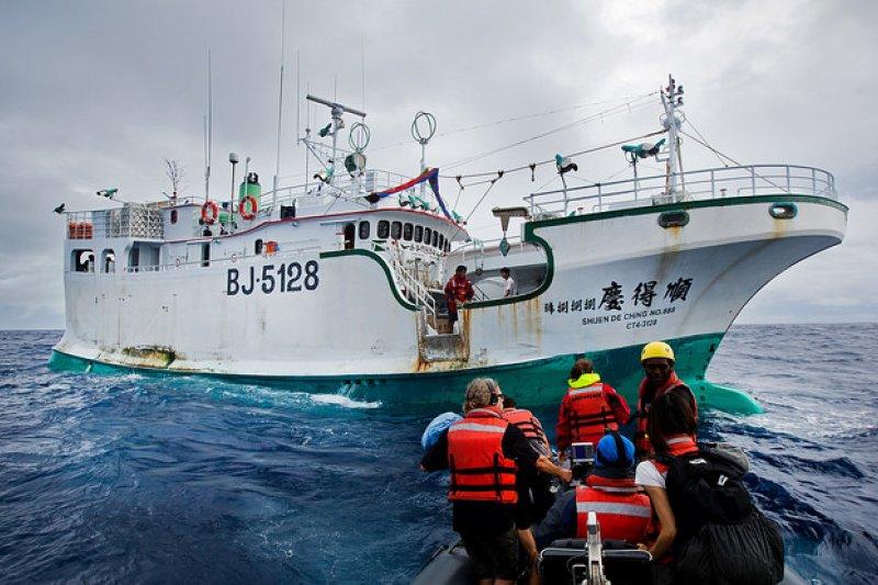 漁業署確認順得慶888號有將鯊魚漁獲割鰭棄身,及捕撈太平洋禁捕的黑鯊等違法行為,已處分收回漁業執照8個月以及15萬元罰鍰,同時沒入鯊魚漁獲物。(取自台灣綠色和平組織網站)