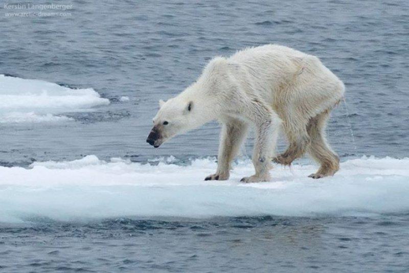 如果每天只能用一度電,你會做什麼?再不節電,第一個消失的物種將是可愛的北極熊!(圖/Kerstin Langenberger Photography@facebook)