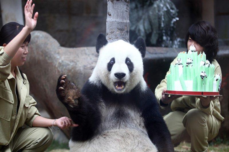 2000年,貓熊巴斯成功進行白內障手術後,當時的福建省省長的習近平專門發去賀信:「大貓熊不僅是福州的,也是全國全世界人民的共同財富」。(取自中國網)