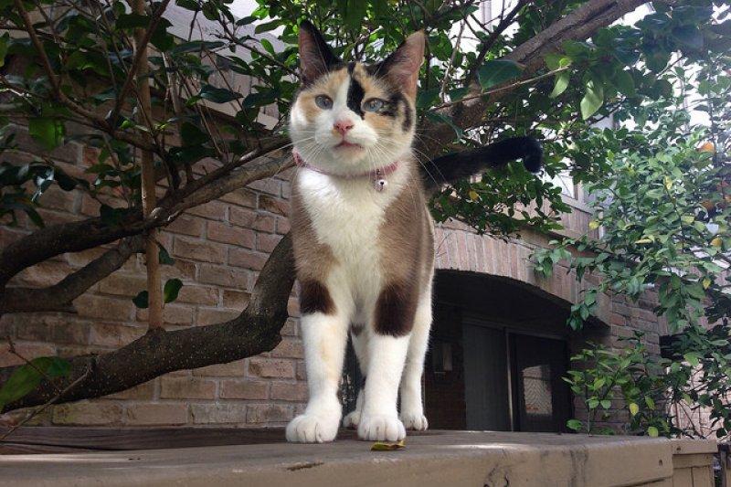 同一隻野貓叫牠貓貓跟小花,感覺印象就是不一樣(圖/Laurence Simon@flickr)