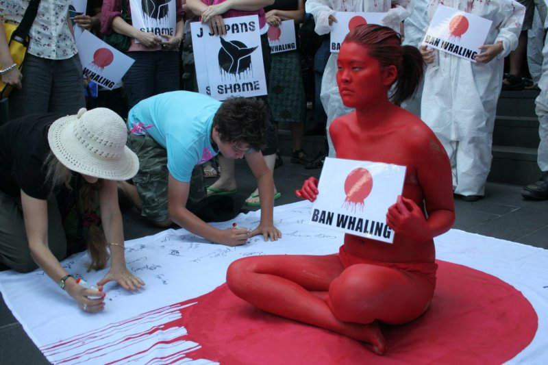 澳洲的反對捕鯨抗議。