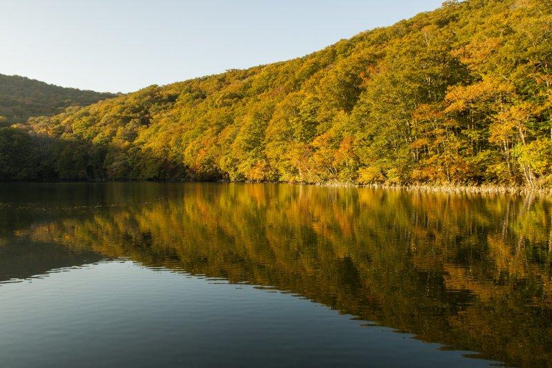 秋季是欣賞蔦沼的最佳時機。(圖/Sungsil Hwang@Flickr)