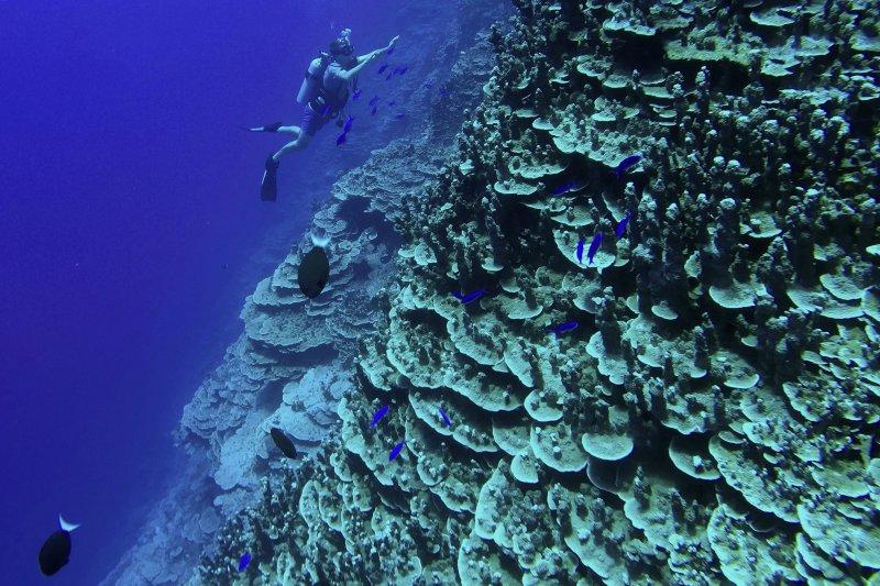 馬紹爾群島的海洋世界(美聯社)