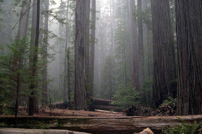 Redwood National and State Parks California 星際大戰拍攝地點