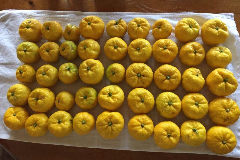 台灣人冬至吃湯圓,日本人過冬至,卻是拿柚子泡澡。(圖/305 Seahill@Flickr)