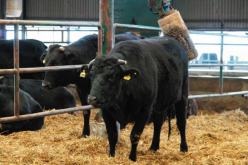 牛在屋頂下會成「牢」字,因為是祭祀的牛。