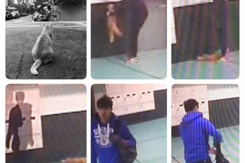 陳姓澳門僑生於12月28日在台北市溫州街一帶虐待並殺害當地一隻人氣很高的流浪貓「大橘子」,犯案過程全被監視器錄下。(取自簡舒培臉書)
