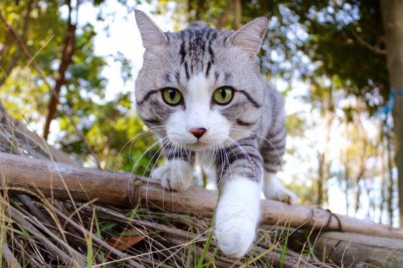 快來看看你有沒有以下迷思吧!(圖/野良猫 ニャン吉@flickr)
