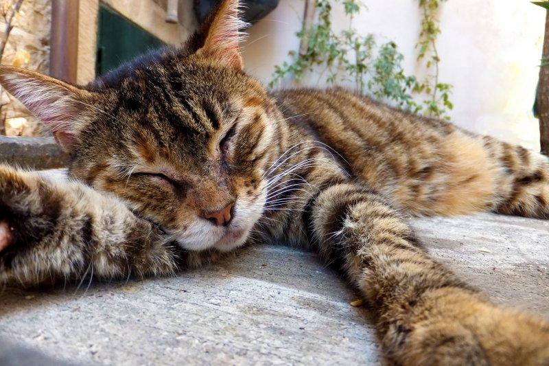 為什麼每天都睡8小時了,醒來以後還是累得像遊魂一樣?(圖/Breckles@flickr)