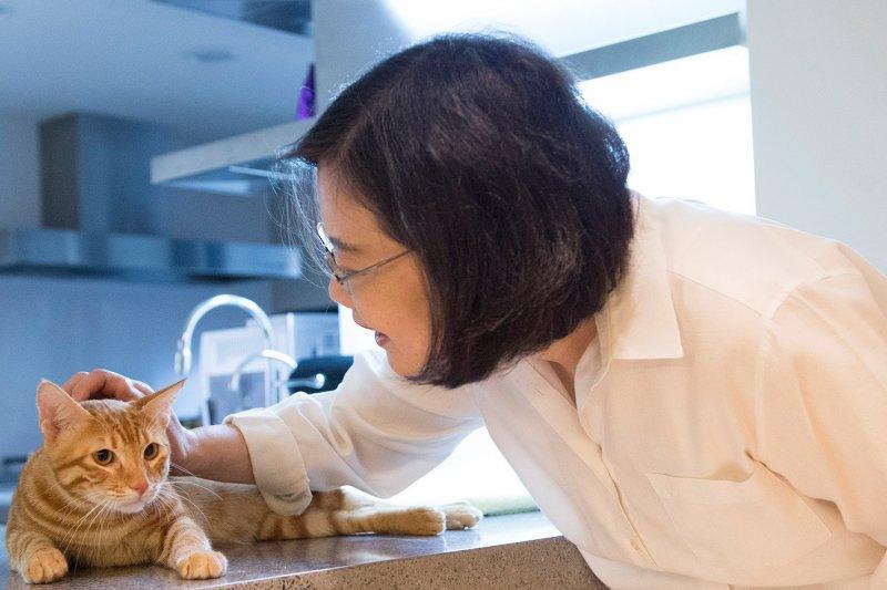 總統當選人蔡英文去年新收養的貓蔡阿才。(取自蔡英文臉書)