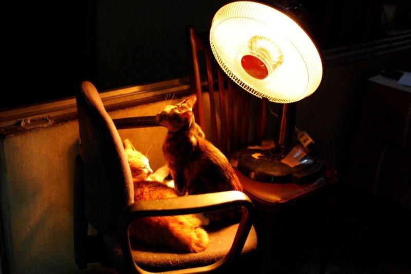 電暖器。(midorisyu@flickr/CC BY 2.0)