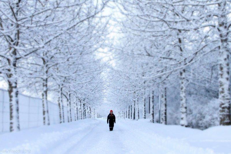 寒流帶來難得一見的降雪,也帶走許多漁民的希望(圖/Helgi Halldórsson@flickr)