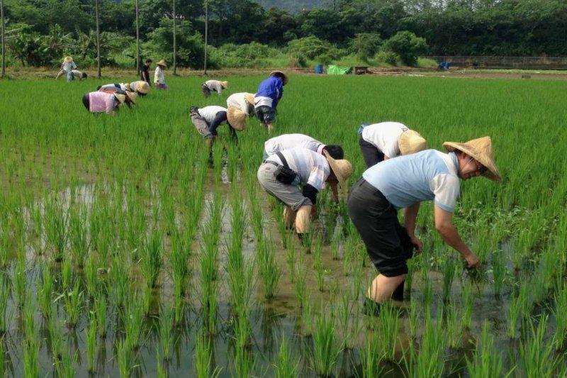 農民團體幹部聯合訓練協會對全台1500位農民進行問卷調查,發現有44%的農民完全沒聽過TPP,46%不知道TPP是什麼。(取自新北市農業局網站)